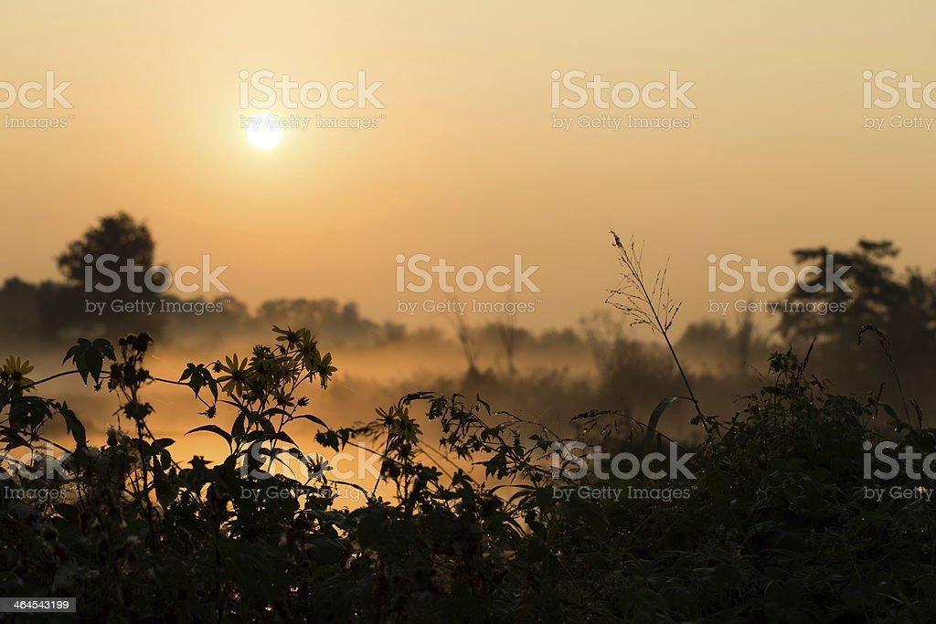 goog mornong, sun! stock photo