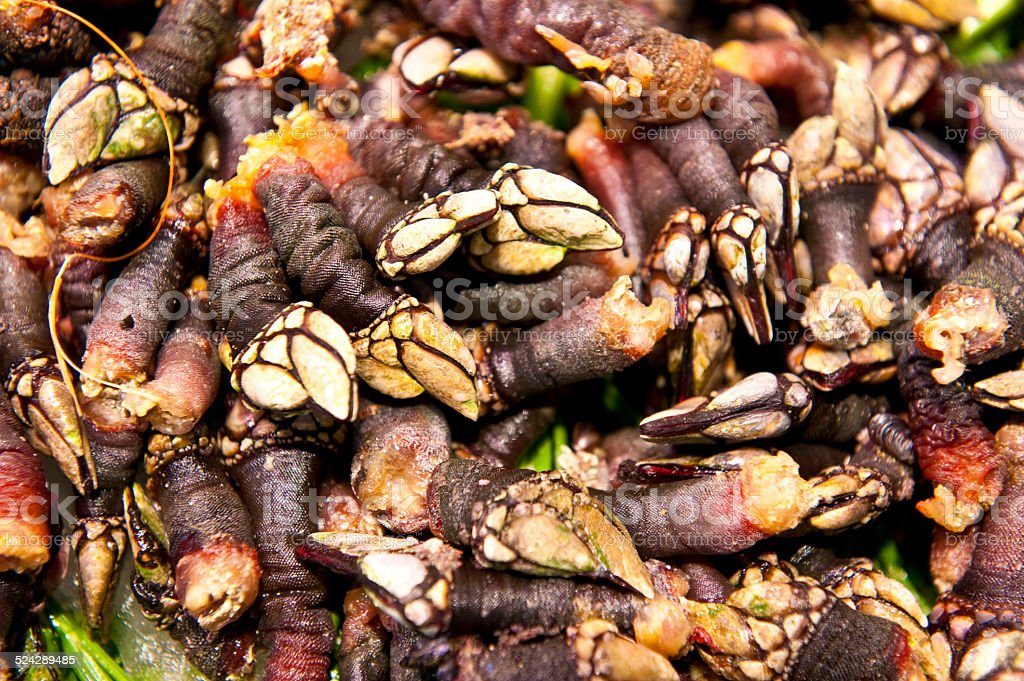 Goose barnacles for sale in a spanish fish market stock for Fish in spanish