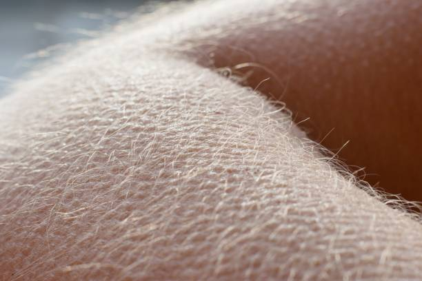 Goose bumps - human skin reaction on the cold Goose bumps - human skin reaction on the cold goosebumps stock pictures, royalty-free photos & images