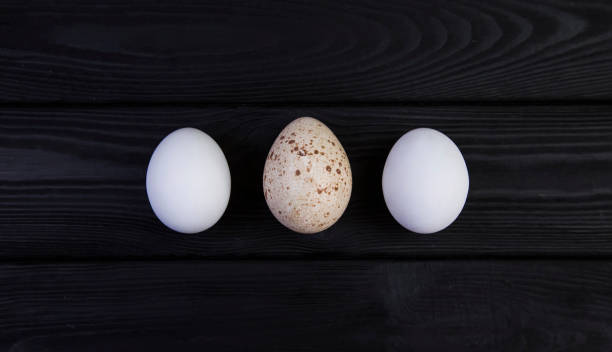 Goose egg and chicken eggs on a black wooden background. The difference in the size of eggs of various birds stock photo