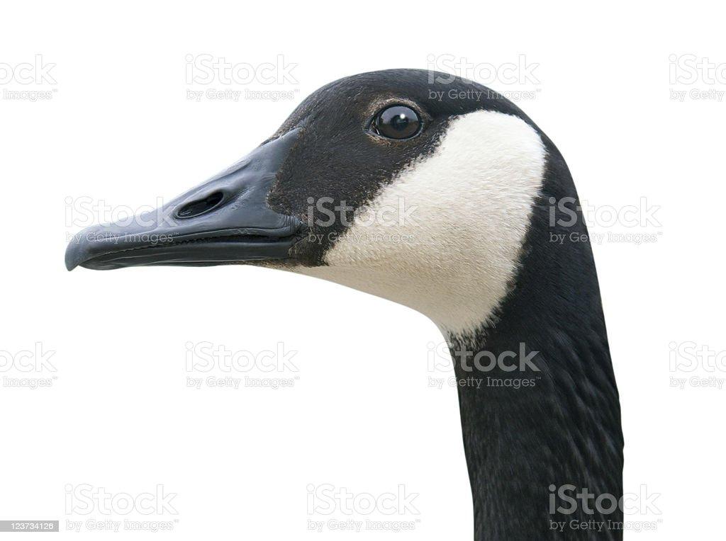 Goose tête avec un Tracé de détourage - Photo