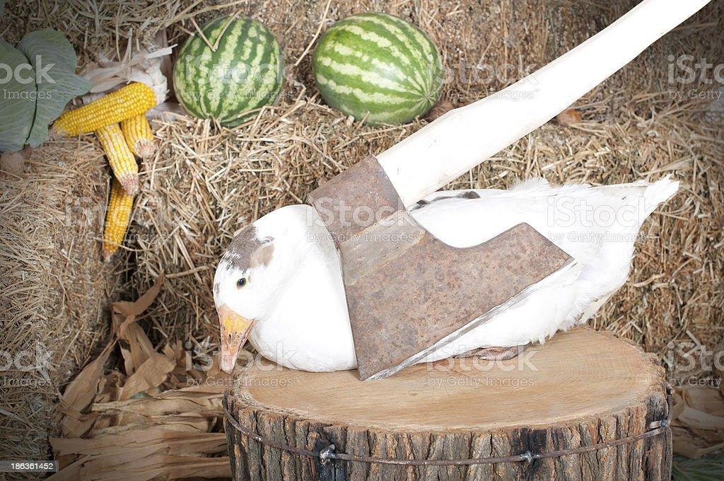 goose sitting near an ax royalty-free stock photo