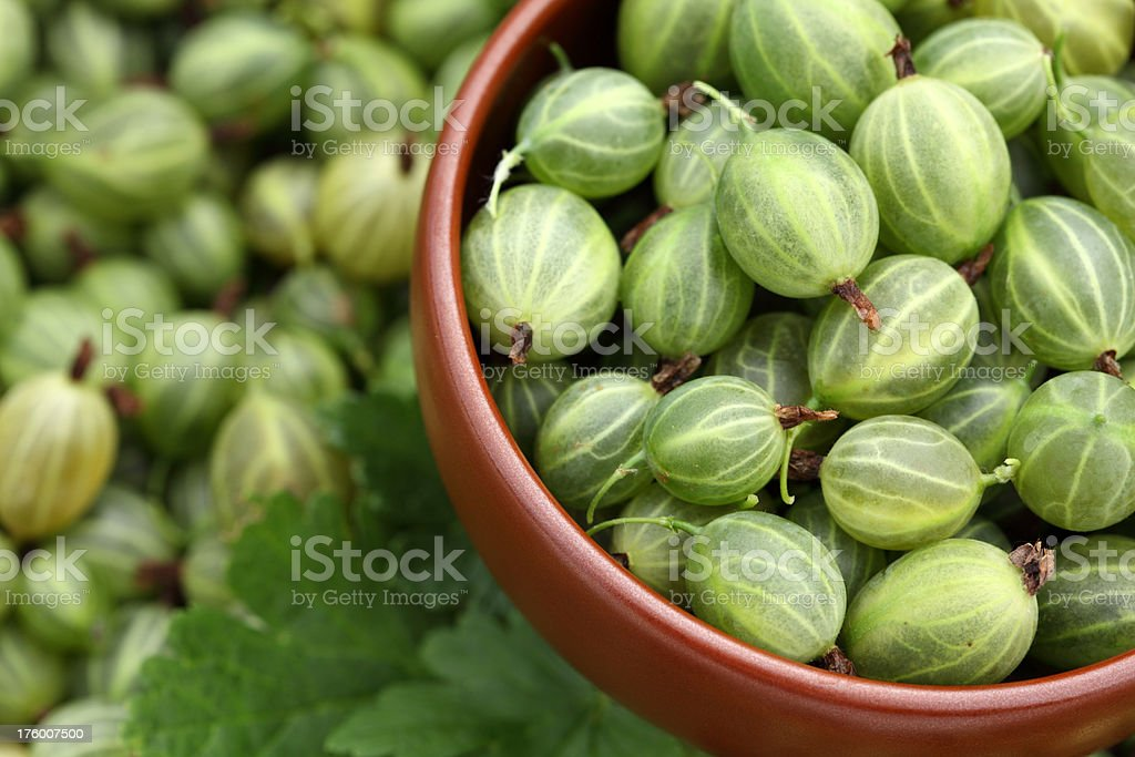Gooseberries in a bowl royalty-free stock photo
