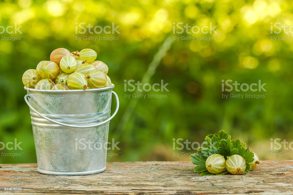 Gooseberries in a bucket on a background of green стоковое фото