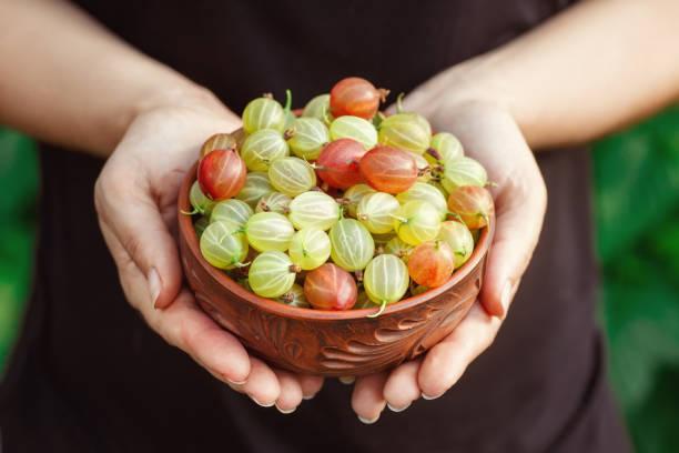 groseilles à maquereau dans un bol à mains femmes - Photo