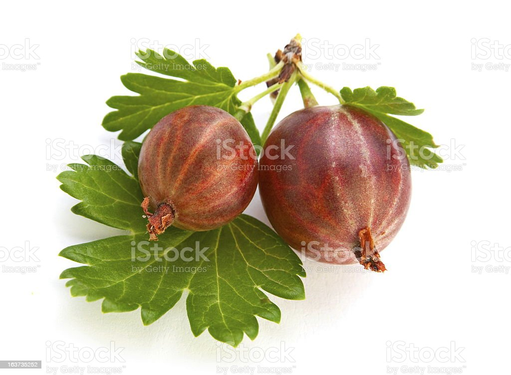 Gooseberry with leaf royalty-free stock photo