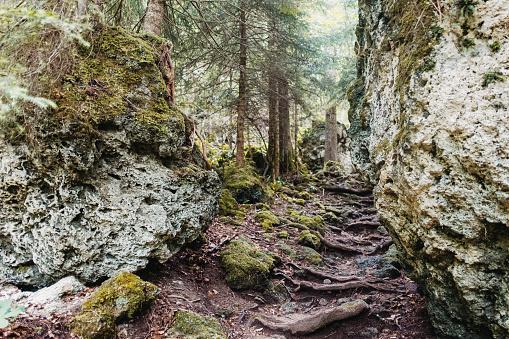 Gorge du Chauderon wild hiking trail in Montreux, Canton de Vaud (Switzerland)