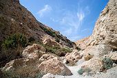 Gorge in the mountains. An oasis in the Judean desert. Beautiful mountain landscape. Nature of the middle East. National park of Israel.