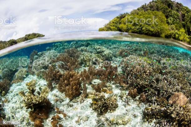 Gorgeous Corals In Raja Ampat Shallows Stock Photo - Download Image Now