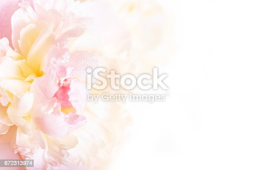 istock A gorgeous floral background with delicate petals of a blooming peony. 672313974