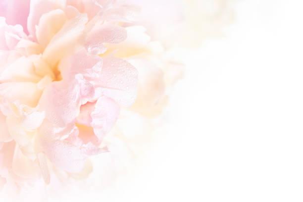 Gorgeous floral background with delicate petals of a blooming peony picture id684793808?b=1&k=6&m=684793808&s=612x612&w=0&h=odyljlkqkyr4ebdeyjb1 1efnezjl8peqx ljx4e1mi=