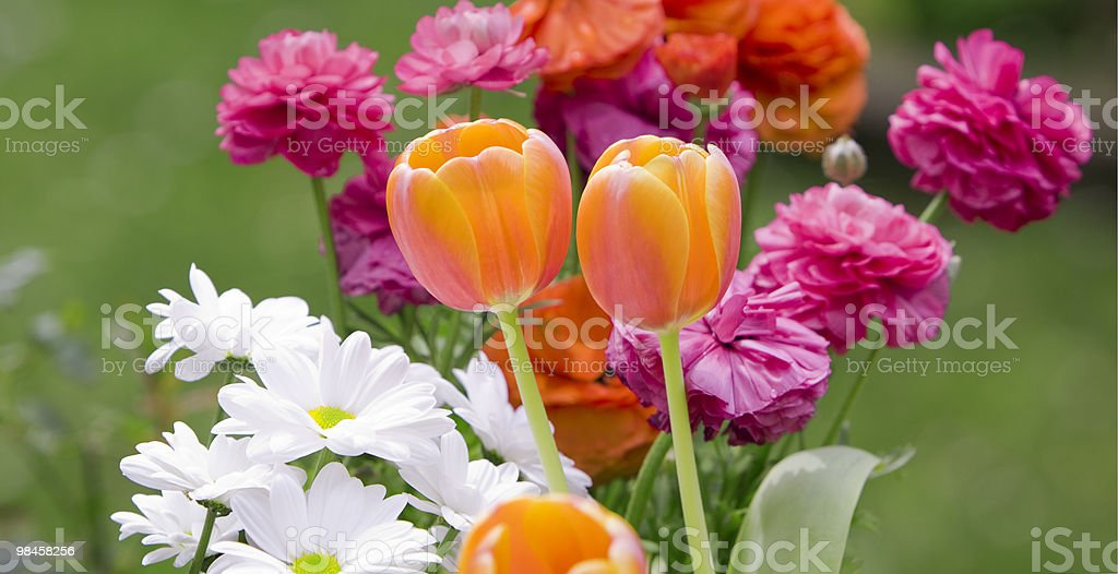Gorgeous flowers (panorama) royalty-free stock photo