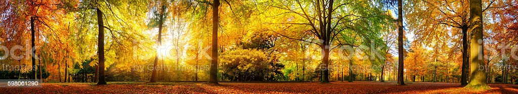 Gorgeous forest panorama in autumn stock photo