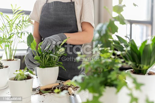 Close-up of woman hands tenderly touching white pots with exotic sprout. Cute model in gardener uniform repotting green home flowers. Gardening concept
