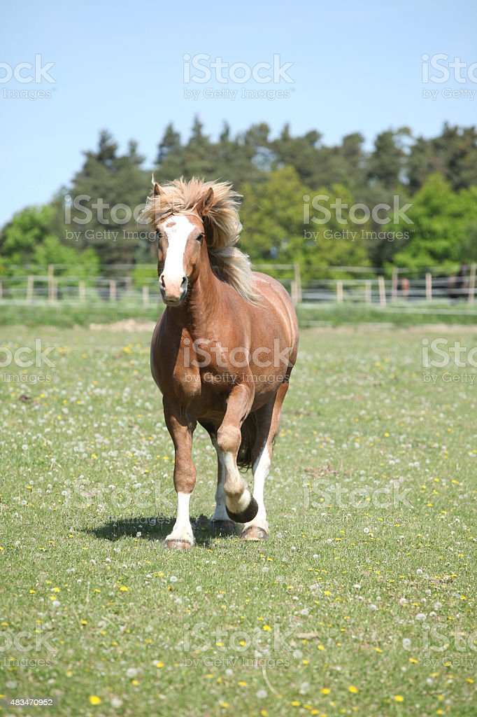 Gorgeous horse running on flowered pasturage stock photo