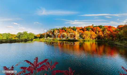 Mesmerizing gorgeous inviting view of autumn colorful leaves forest in the lake on blue sky background, landscape scenery
