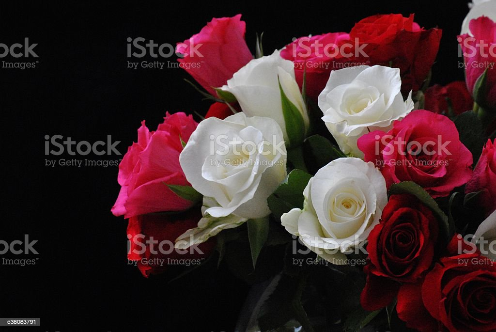 Gorgeous Multi-Colored Roses stock photo