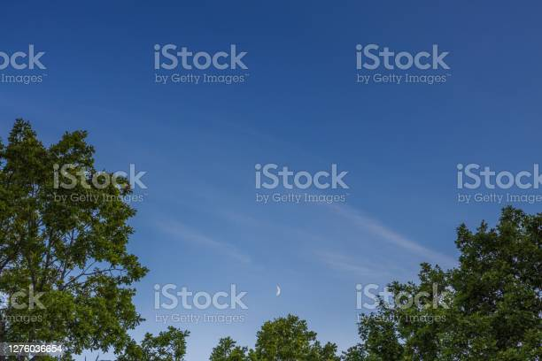 Photo of Gorgeous natural background showing green tree tops on blue sky and crescent moon.