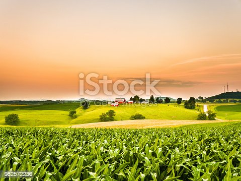Gorgeous panoramic farm or agricultural scene with a corn field in the foreground and rolling hills with a cow pasture and barns along the orange colored sky horizon.