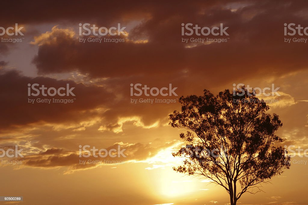 Gorgeous Sunset Behind Tree royalty-free stock photo