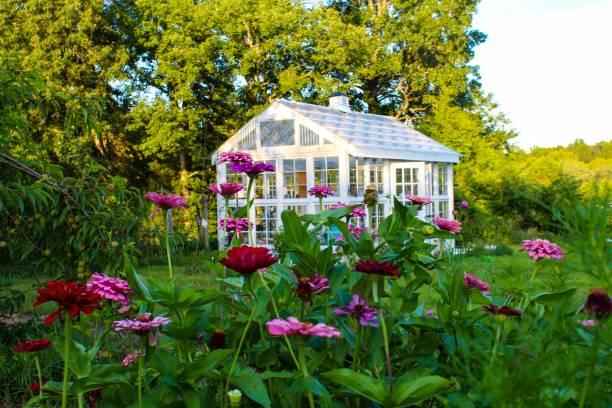 prachtige victoriaanse stijl kas in een tuin van zinnias - glass house stockfoto's en -beelden