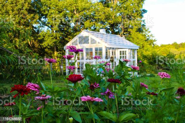 Photo of Gorgeous Victorian style greenhouse in a garden of zinnias