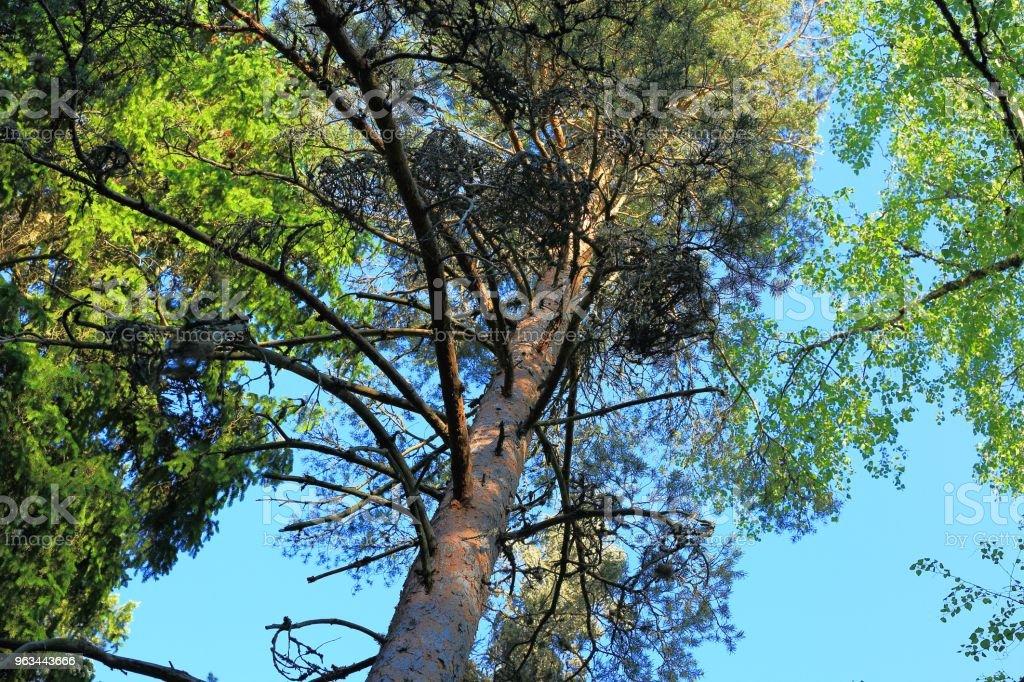 Yeşil ağaç kron, renkli doğa arka plan mavi gökyüzünde muhteşem görünümü. - Royalty-free Aydınlık Stok görsel