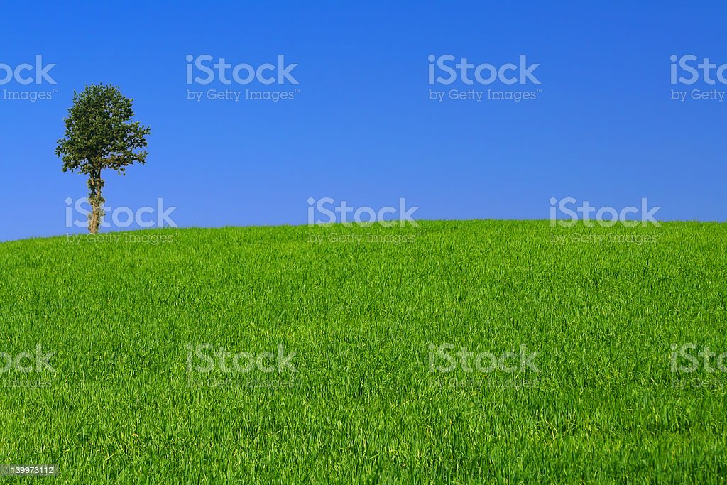 gorgeus landscape with lonely tree royalty-free stock photo