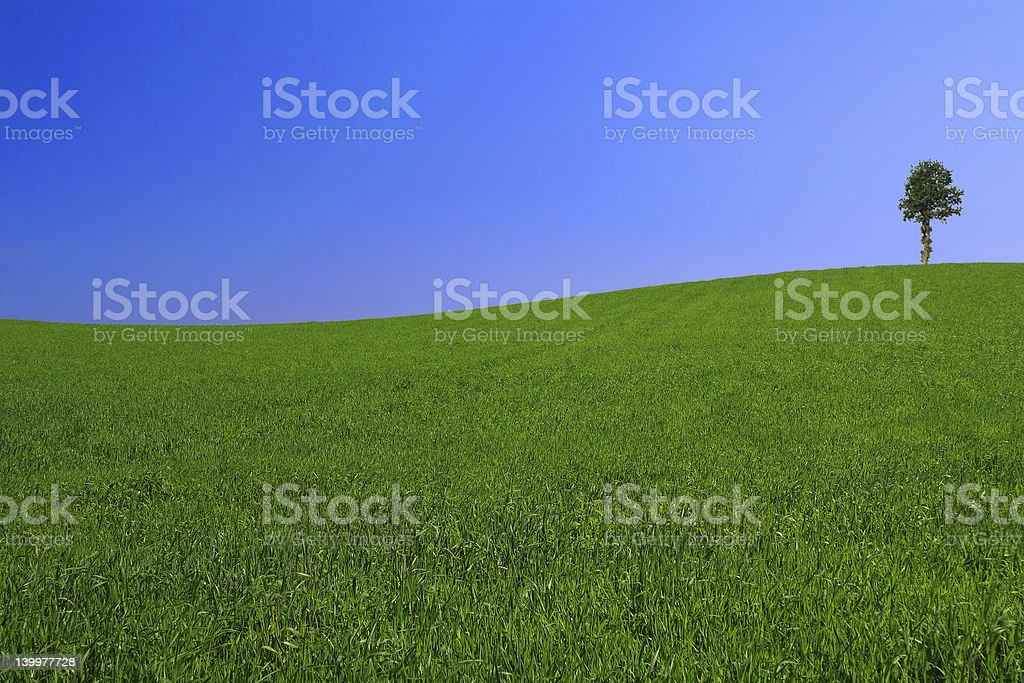 gorgeus landscape with lonely tree #2 royalty-free stock photo