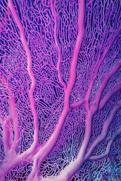 gorgonien korallen im roten meer - coral and mauve stock-fotos und bilder