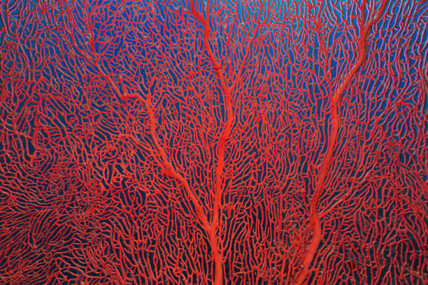 Gorgonian Coral in Red Sea stock photo