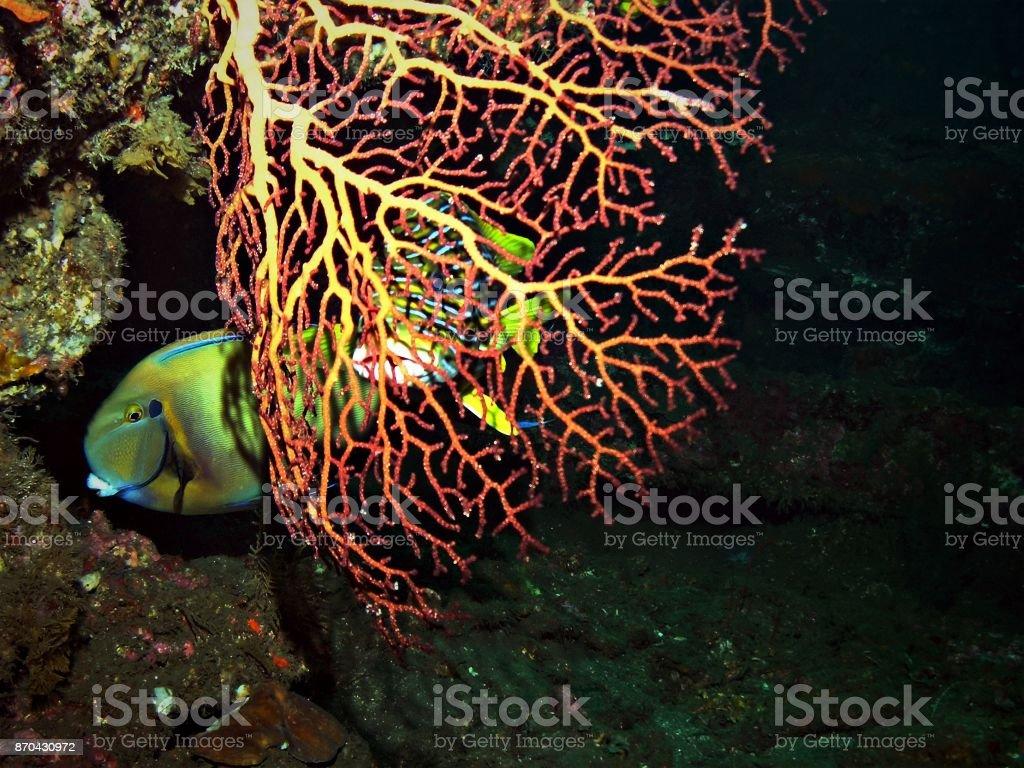 Gorgonian inside USS Liberty shipwreck stock photo