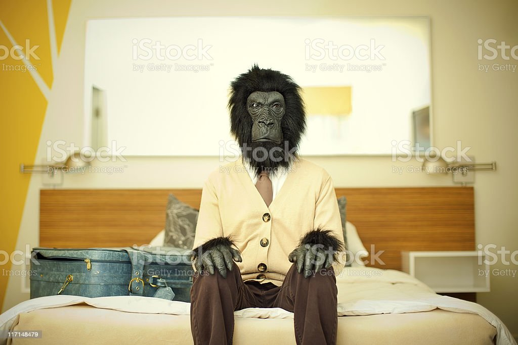 Gorilla Business Man in Hotel Room stock photo