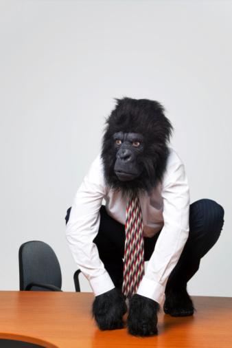 Gorilla businessman in shirt and tie sat on a desk