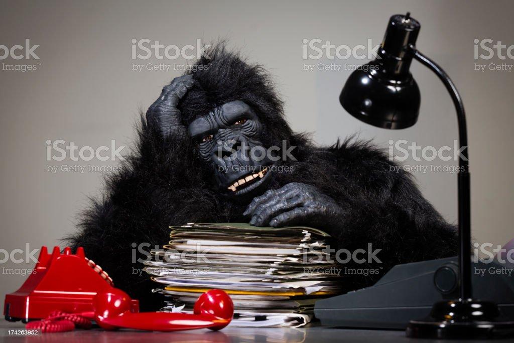 Gorilla Businessman royalty-free stock photo