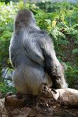 La bellezza del regno animale rappresentata da questo stupendo mammifero