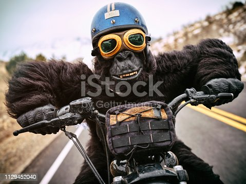 A gorilla biker on an open road in the mountains,