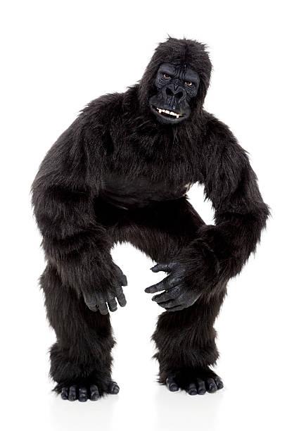 gorille sur blanc - mascotte photos et images de collection