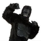 A gorilla on a white background.