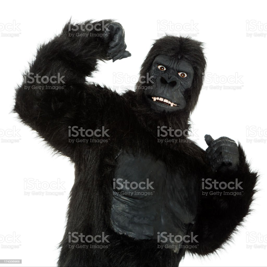 Gorilla on White stock photo