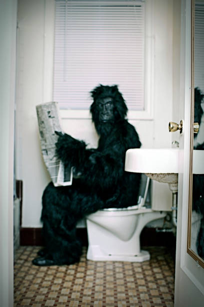 gorilla setzt einen vintage-badezimmer und lesen sie dabei die zeitung - fliesen verlegen stock-fotos und bilder