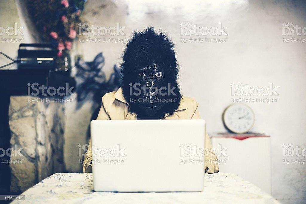 Gorilla using a computer royalty-free stock photo