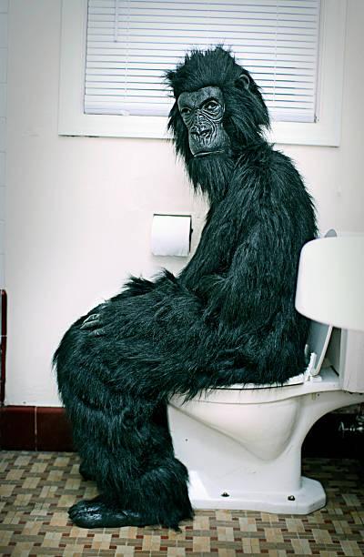 gorilla auf die toilette im badezimmer - fliesen verlegen stock-fotos und bilder