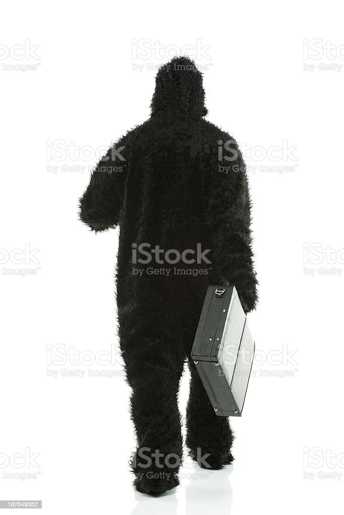 Gorilla walking with briefcase royalty-free stock photo