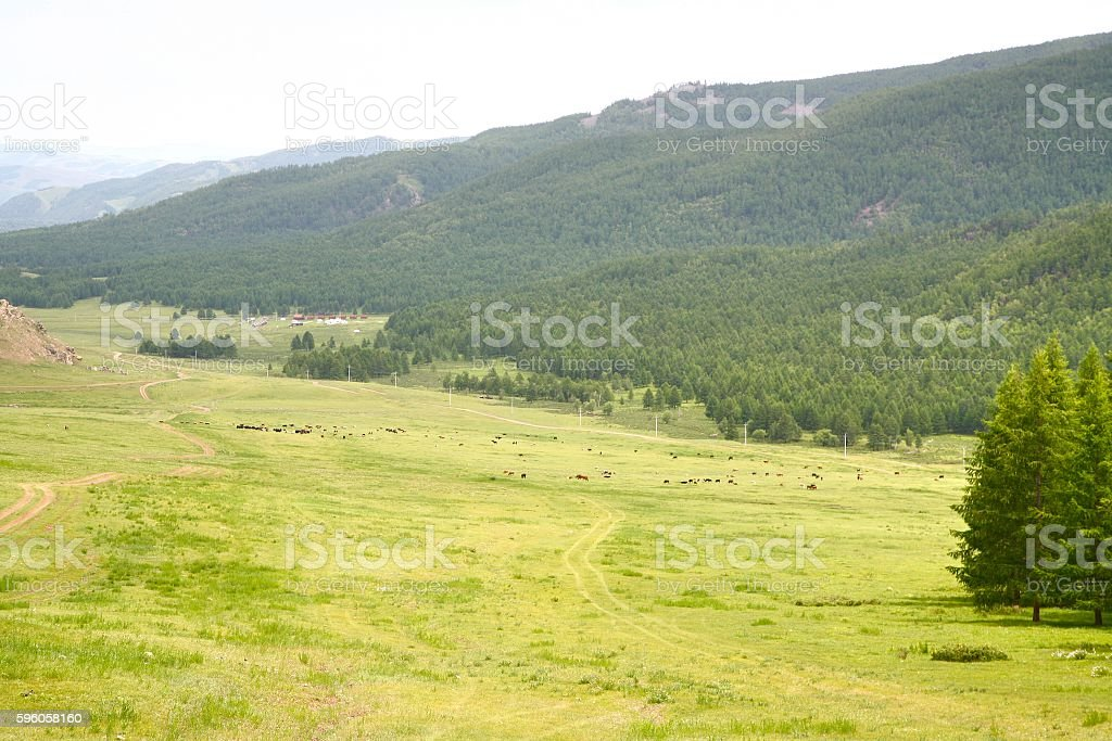 Gorkhi-Terelj National Park at Ulaanbaatar , Mongolia royalty-free stock photo