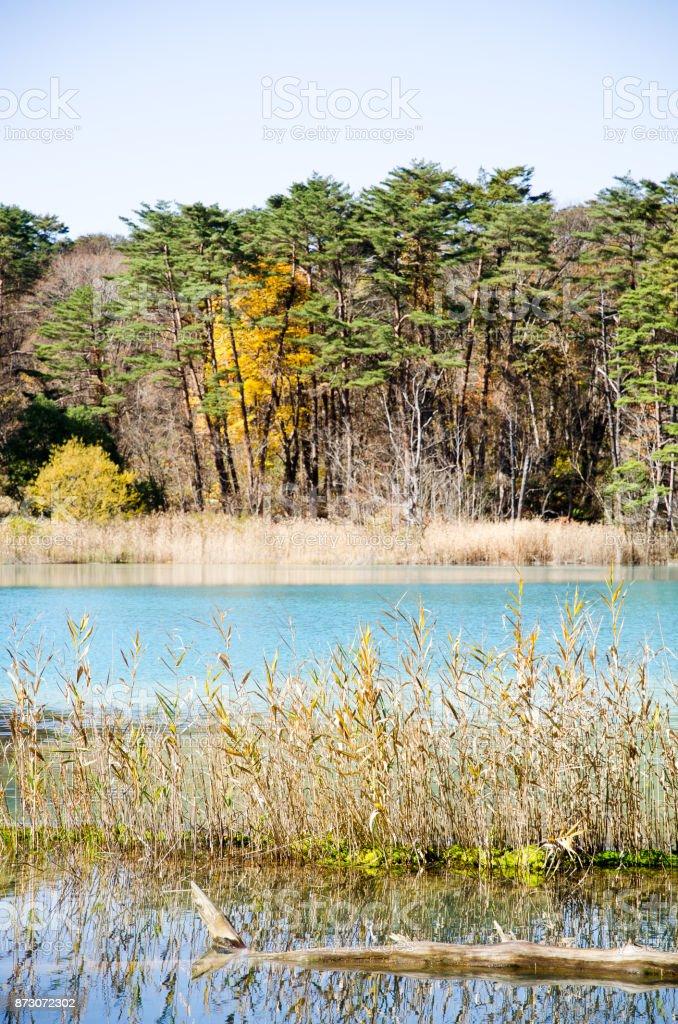 Goshiki-numa in Autumn, Urabandai, Fukushima, Japan - Benten-numa with autumnal tints of yellow stock photo