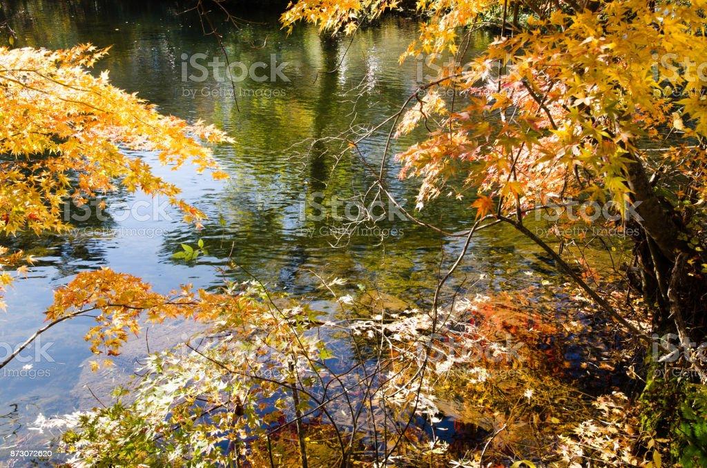 Goshiki-numa in Autumn, Urabandai, Fukushima, Japan - Yanagi-numa with autumnal tints of red and yellow stock photo