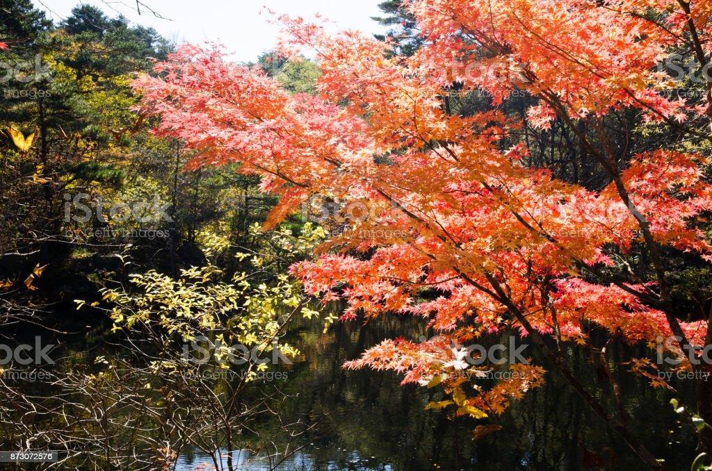 Goshiki-numa in Autumn, Urabandai, Fukushima, Japan - Yanagi-numa with autumnal tints stock photo