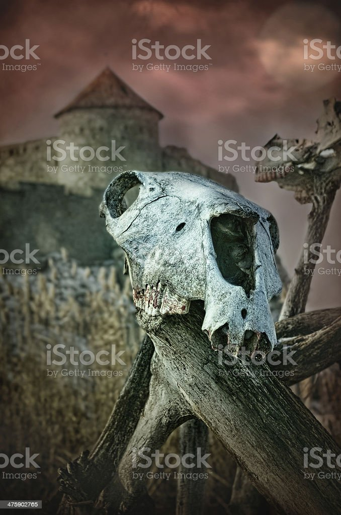 Gothic skull of a horse near the old fortress stock photo