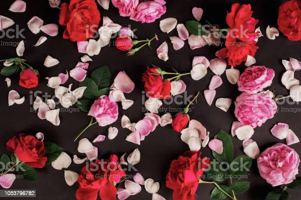Gothic Wallpaper Postcard For Valentines Day Rose Flower Pattern On Black Background Red Summer Flowers With